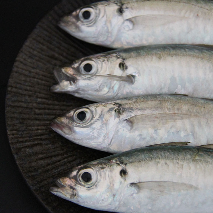 slipmouth fish seafood available for export