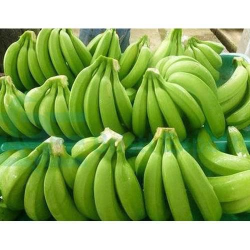 Philippines Cavendish Bananas Suppliers